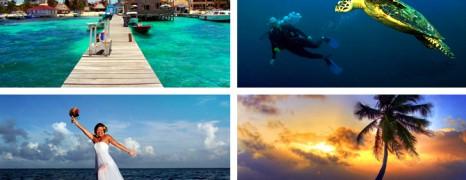 Barrier Reefs, Crocodiles, and Jaguars